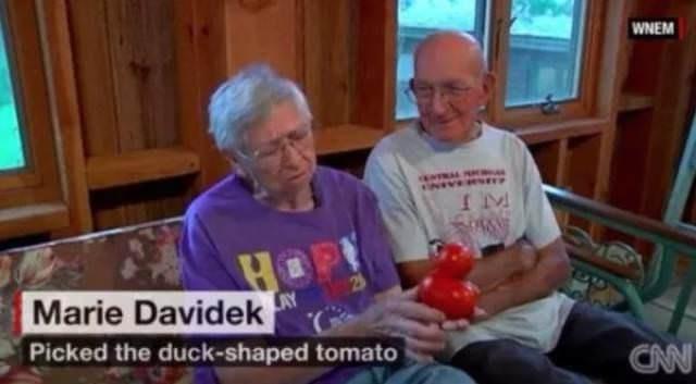 Grandparent - WNEM IM HOP Marie Davidek 23 Picked the duck-shaped tomato CAN