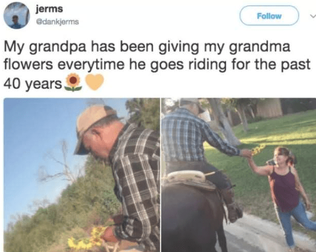 Adaptation - jerms Follow @dankjerms My grandpa has been giving my grandma flowers everytime he goes riding for the past 40 years