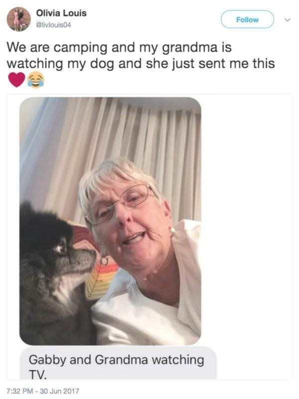 Face - Olivia Louis Follow @livlouis04 We are camping and my grandma is watching my dog and she just sent me this Gabby and Grandma watching TV 7:32 PM-30 Jun 2017