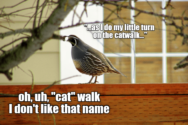 I quail at the name - Animal Comedy - Animal Comedy, funny