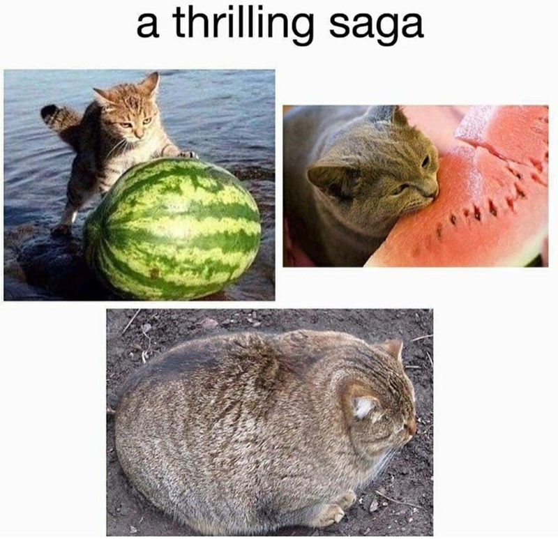 Funny meme about cat eating watermelon.