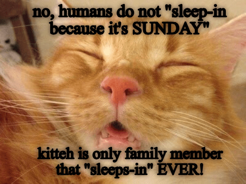 kitteh house rules - Lolcats - lol   cat memes   funny cats   funny