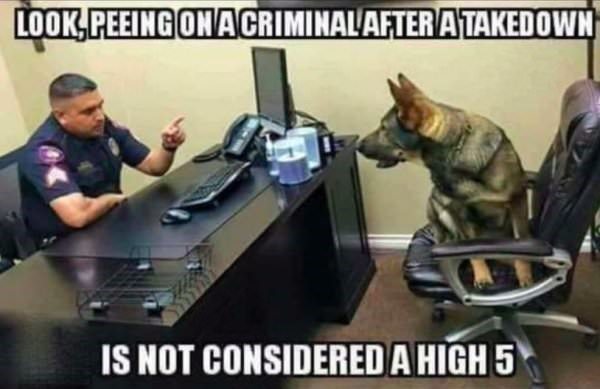 Service Dog Memes - Dog memes about a dog that peed on a criminal