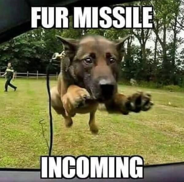 Dog meme of a dog jumping into a car window