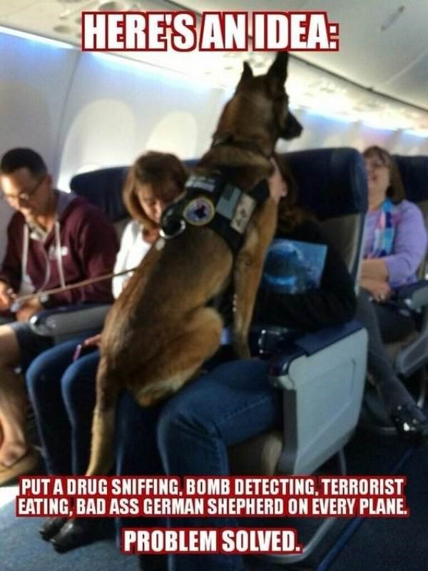dog meme of a German Shepard on a plane that looks very scary
