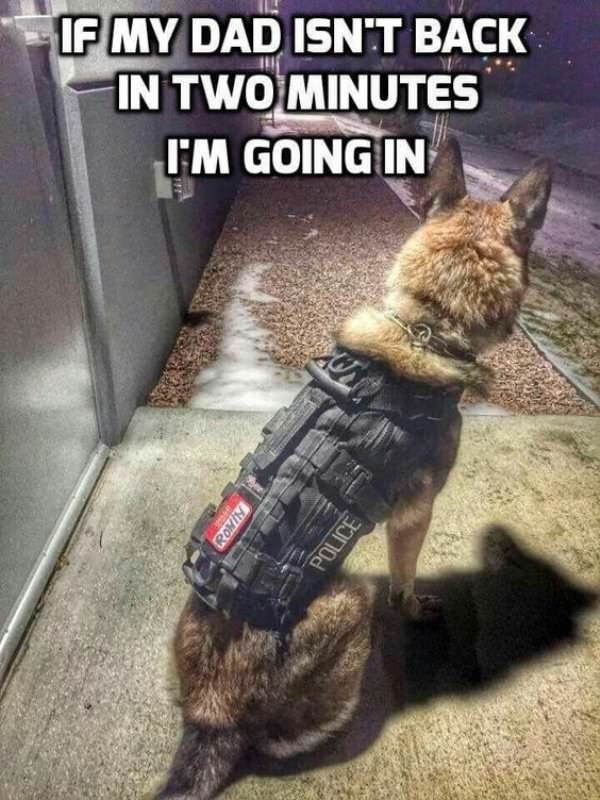 Dog meme of a service dog that is wearing a police vest
