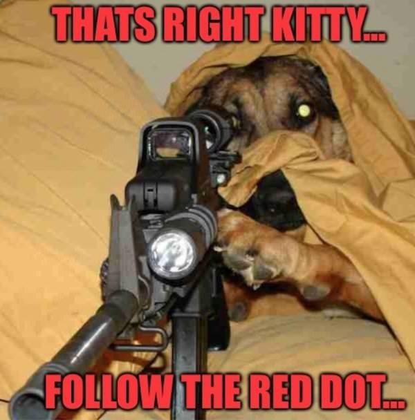 Dog Meme of a dog holding a gun under a blanket
