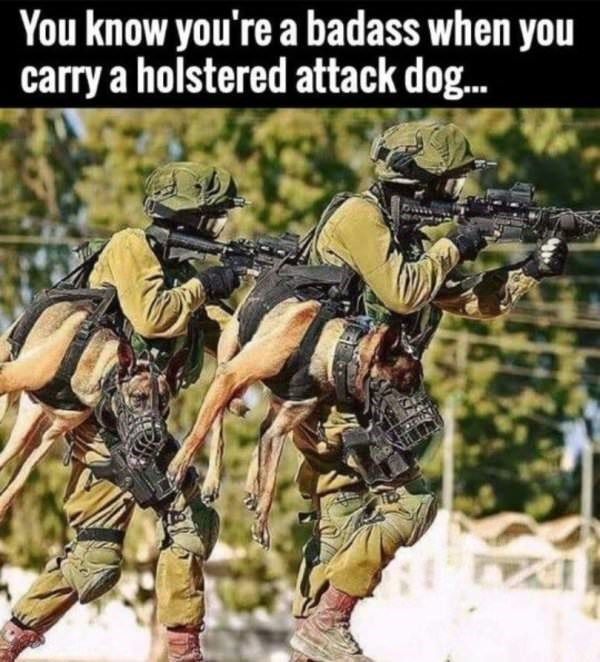 dog meme of soldiers that carry a holstered attack dog