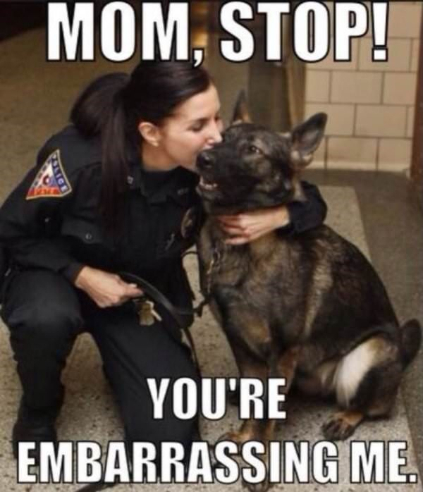 dog meme of a service dog happy about getting cuddled