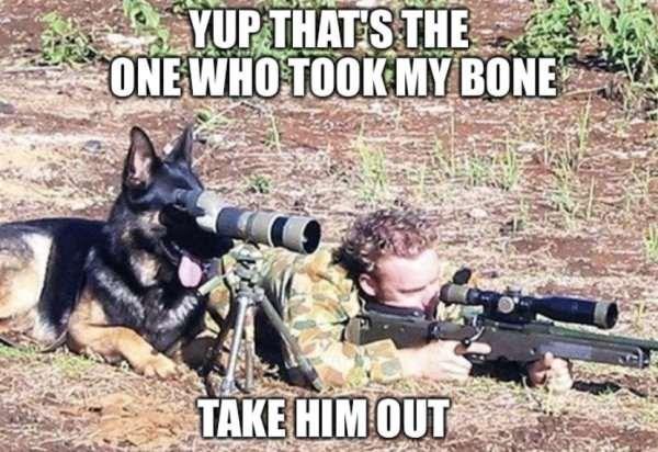 dog meme of a german shepard look through a telescope