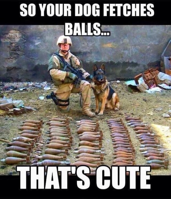 dog meme about a service dog that fetches grenades instead of sticks