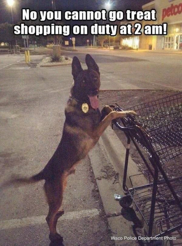 dog meme of a German Sheppard that is using a shopping cart