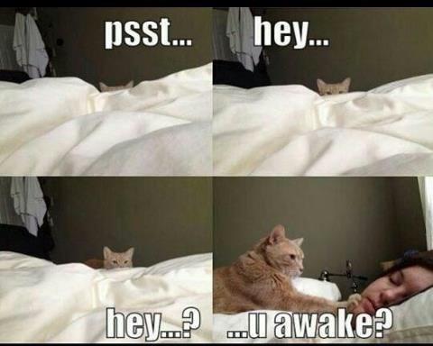 Text - hey... psst... hey.. awake?