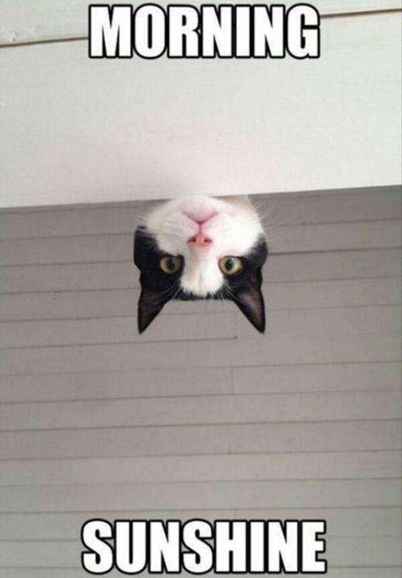 Cat - MORNING SUNSHINE