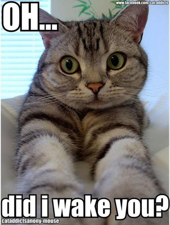 Cat - www.facebook.com/cataddicts didiwake you? cataddictsanony-mouse