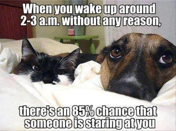 Photo caption - When you wake uparound 2-3a.m.withoutany reason, there's an 85% chance that someone is staring atyou