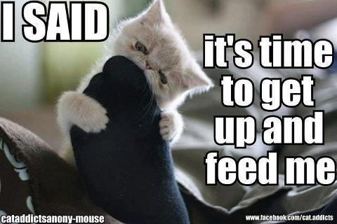 Photo caption - ISAID it's time toget upand feed me www.facebook.com/cat.addicts Cataddictsanony-mouse