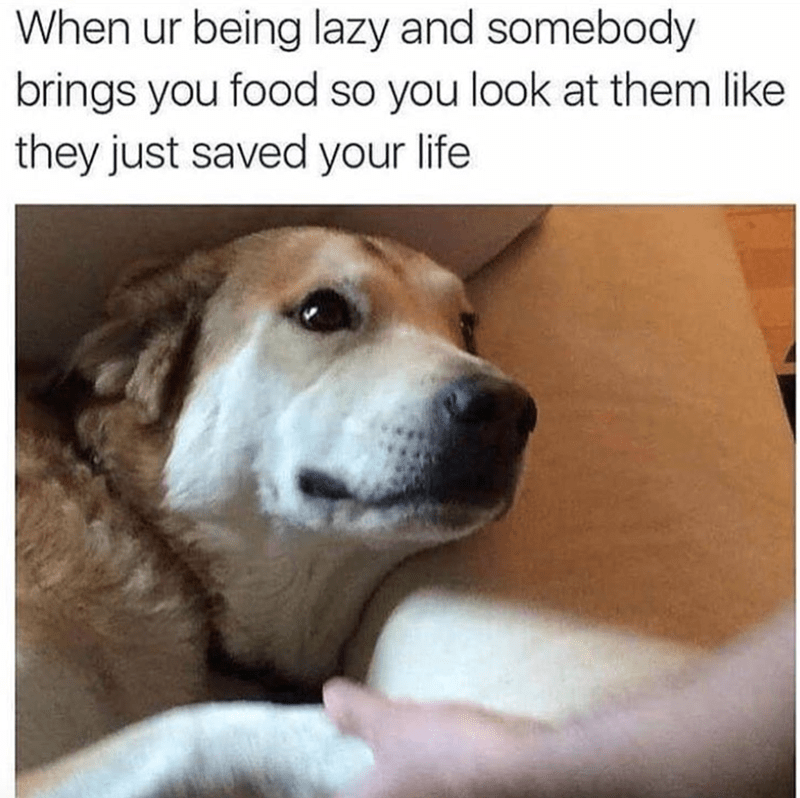 meme - Dog breed - When ur being lazy and somebody brings you food so you look at them like they just saved your life