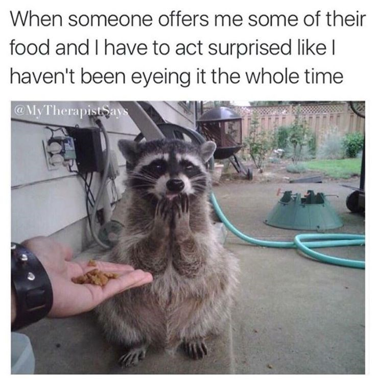 meme - Procyonidae - When someone offers me some of their food and I have to act surprised like I haven't been eyeing it the whole time @MyTherapistSays