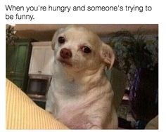meme - Mammal - When you're hungry and someone's trying to be funny