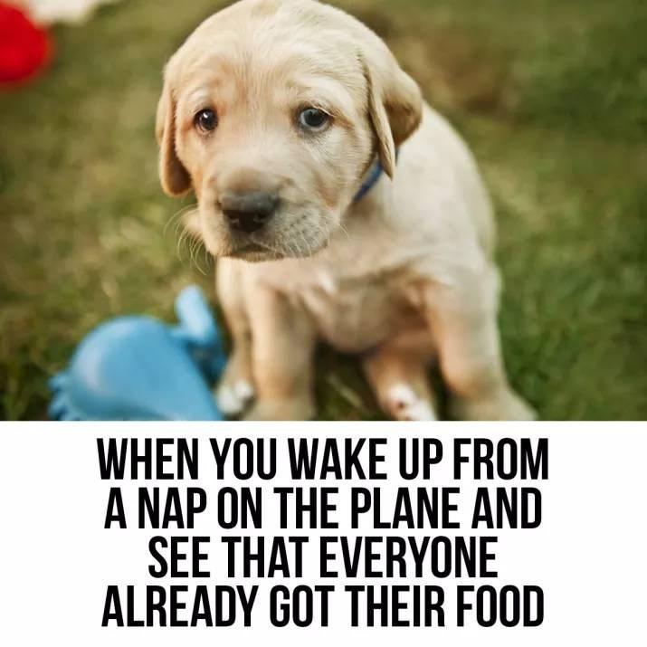 meme - Dog - WHEN YOU WAKE UP FROM A NAP ON THE PLANE AND SEE THAT EVERYONE ALREADY GOT THEIR FOOD