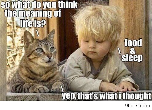 meme - Cat - SO whatdo you think the meaning of life is? food & sleep yen thats what ithought 9LoLs.com