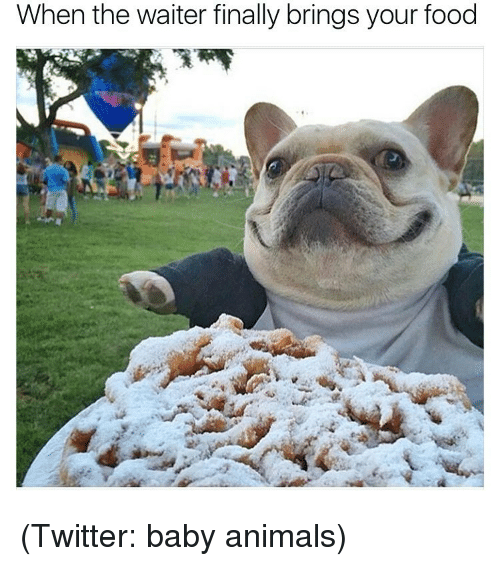 meme - French bulldog - When the waiter finally brings your food (Twitter: baby animals)