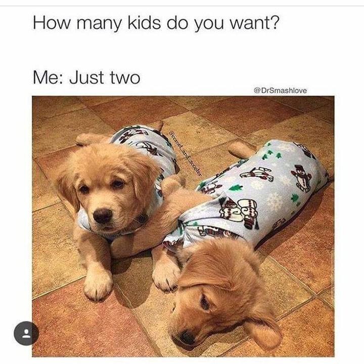 Dog - How many kids do you want? Me: Just two @DrSmashlove Gccmet and sccoler