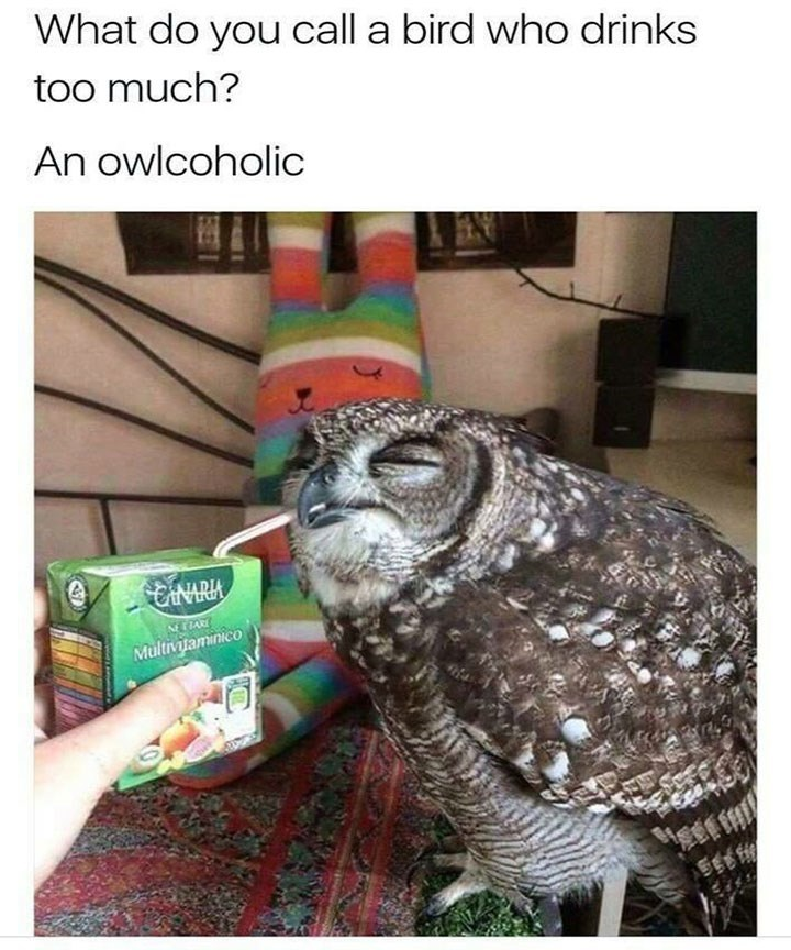 Bird - What do you call a bird who drinks too much? An owlcoholic CANARIA NETPARE Multivaminico SEB F