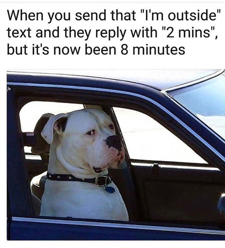 """Dog - When you send that """"I'm outside"""" text and they reply with """"2 mins"""", but it's now been 8 minutes"""