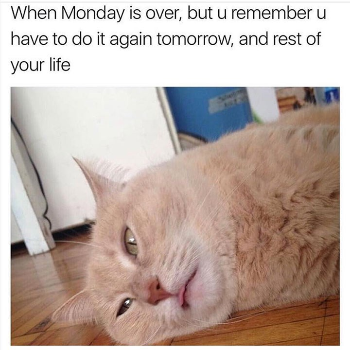 Cat - When Monday is over, but u remember u have to do it again tomorrow, and rest of your life