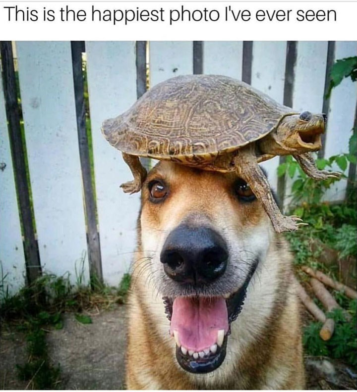 Vertebrate - This is the happiest photo I've ever seen