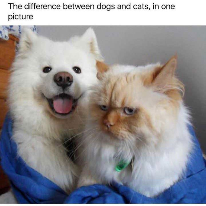 Mammal - The difference between dogs and cats, in one picture