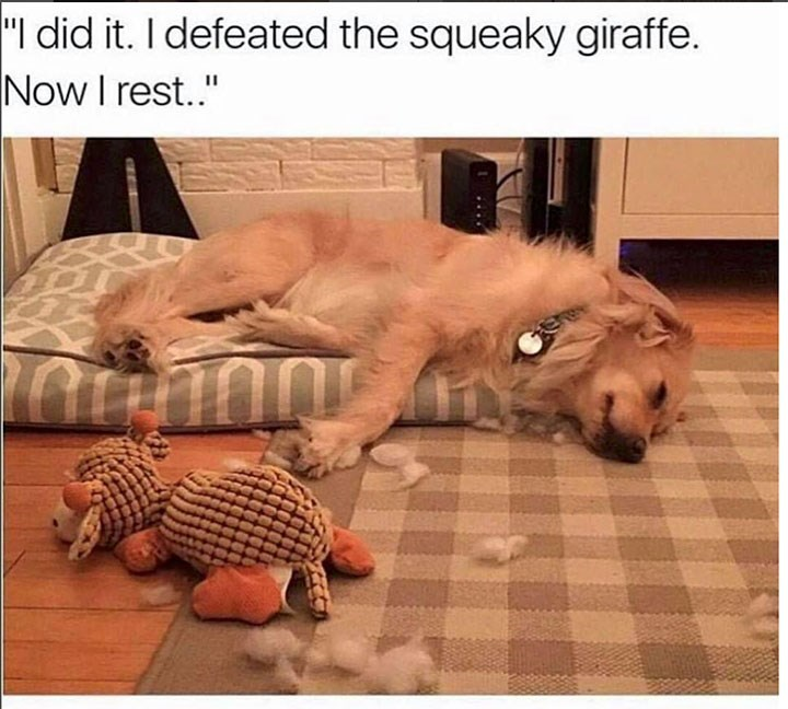 """Dog - """"I did it. I defeated the squeaky giraffe. Now I rest."""""""