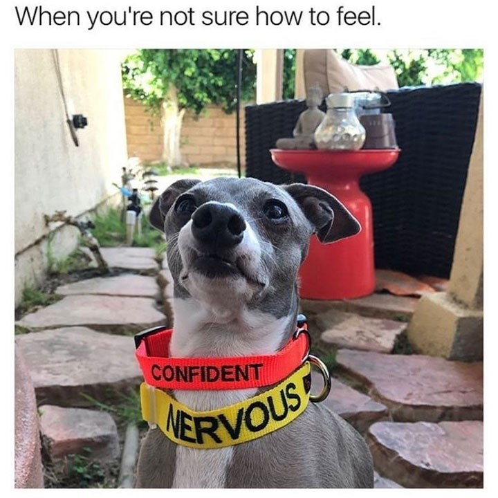 Dog - When you're not sure how to feel. CONFIDENT RVOUS