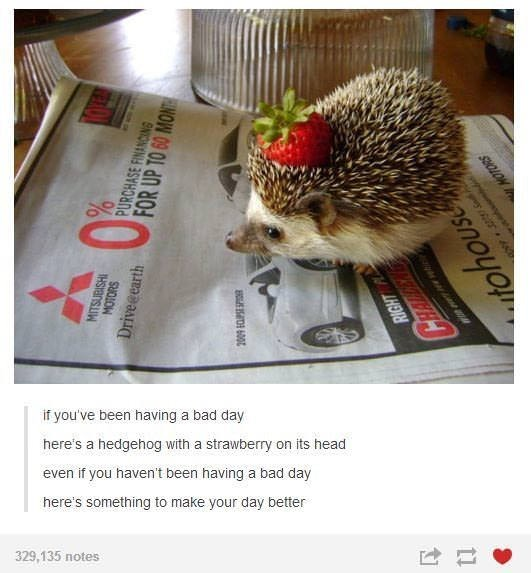 tumblr post of a hedgehog with a strawberry on his head