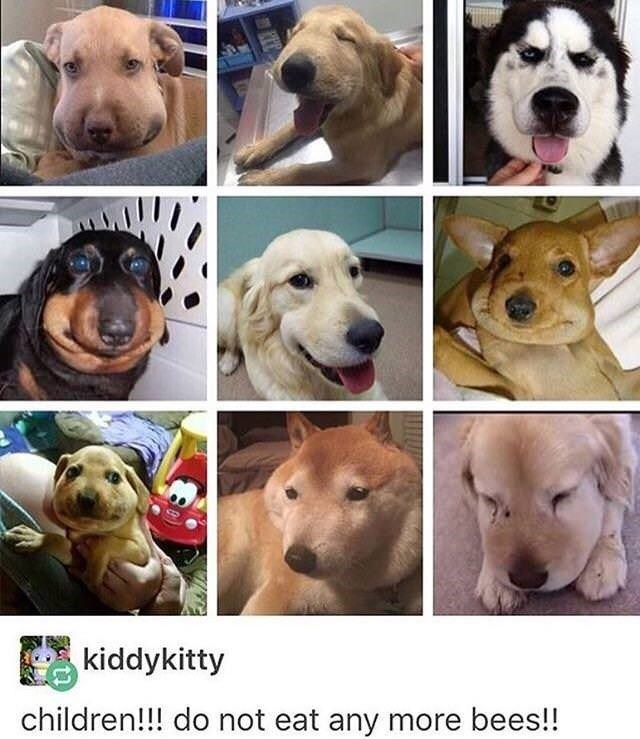 tumblr post of dogs that ate bees