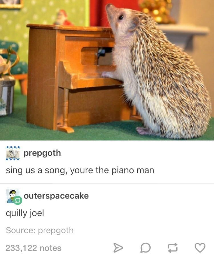 Quilly Joel tumblr post about hedgehog at a mini piano