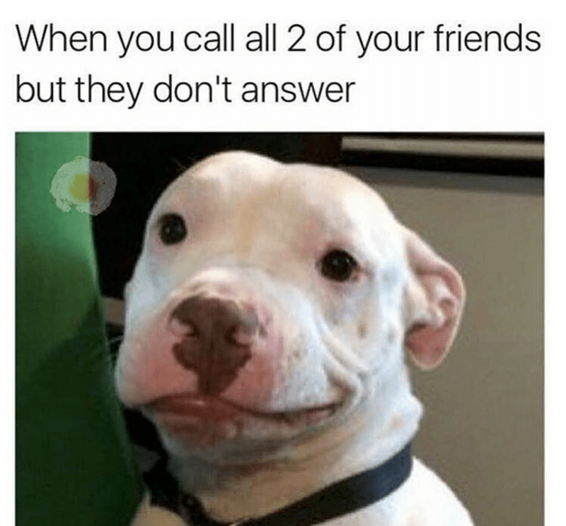 Dog - When you call all 2 of your friends but they don't answer