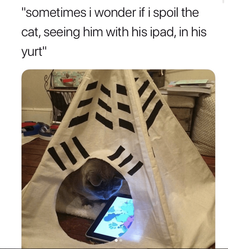 """Product - """"sometimes i wonder if i spoil the cat, seeing him with his ipad, in his yurt"""""""