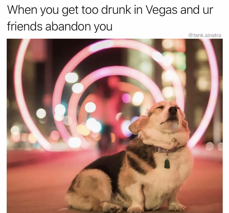 Dog - When you get too drunk in Vegas and ur friends abandon you @tank.sinatra