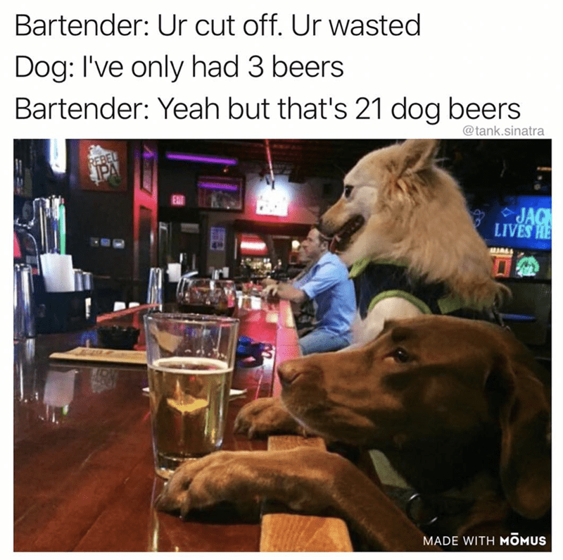 Photo caption - Bartender: Ur cut off. Ur wasted Dog: I've only had 3 beers Bartender: Yeah but that's 21 dog beers @tank.sinatra REBEL JAC LIVES HE JALL MADE WITH MOMUS