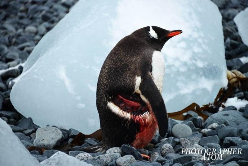 penguins - Bird - PHOTOGRAPHER ΝΟΜΕ