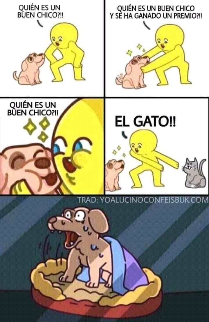 sabes quien es un buen chico el gato