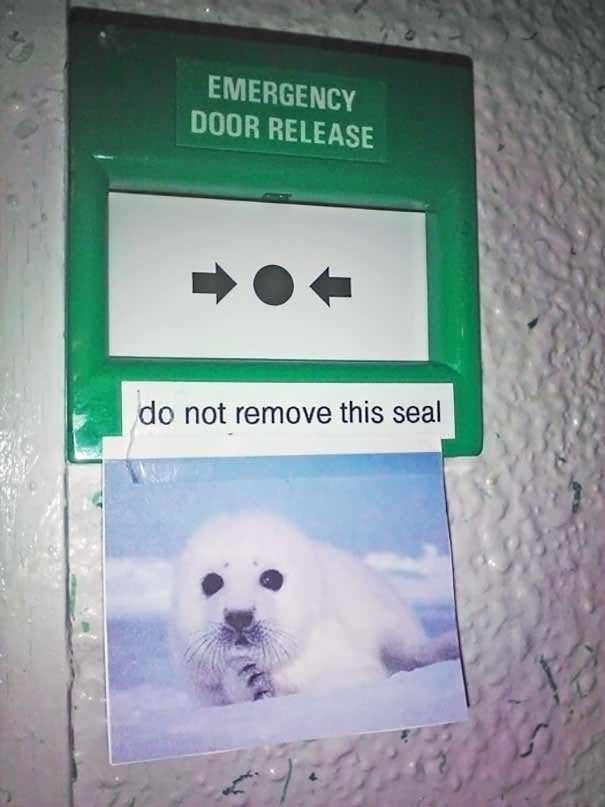 funny vandalism - Bear - EMERGENCY DOOR RELEASE do not remove this seal