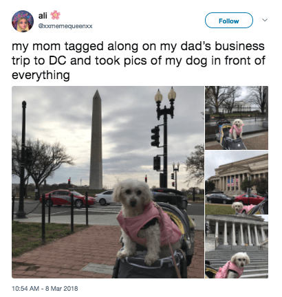 Dog - ali Follow xxmemequeenxx my mom tagged along on my dad's business trip to DC and took pics of my dog in front of everything 10:54 AM -8 Mar 2018
