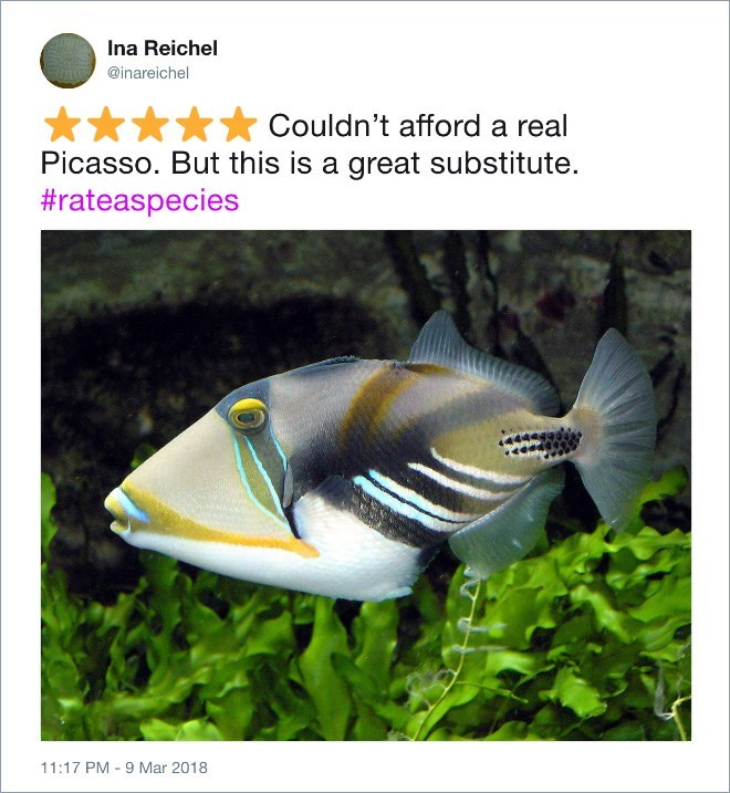 Fish - Ina Reichel @inareichel Couldn't afford a real Picasso. But this is a great substitute. #rateaspecies 11:17 PM - 9 Mar 2018