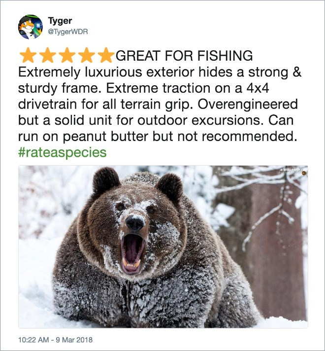 Brown bear - Tyger @TygerWDR GREAT FOR FISHING Extremely luxurious exterior hides a strong & sturdy frame. Extreme traction on a 4x4 drivetrain for all terrain grip. Overengineered but a solid unit for outdoor excursions. Can run on peanut butter but not recommended. #rateaspecies PAr 10:22 AM -9 Mar 2018