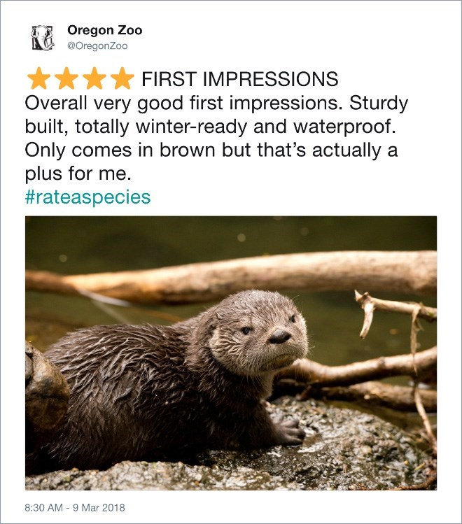 Terrestrial animal - Oregon Zoo @OregonZoo FIRST IMPRESSIONS Overall very good first impressions. Sturdy built, totally winter-ready and waterproof Only comes in brown but that's actually a plus for me #rateaspecies 8:30 AM 9 Mar 2018