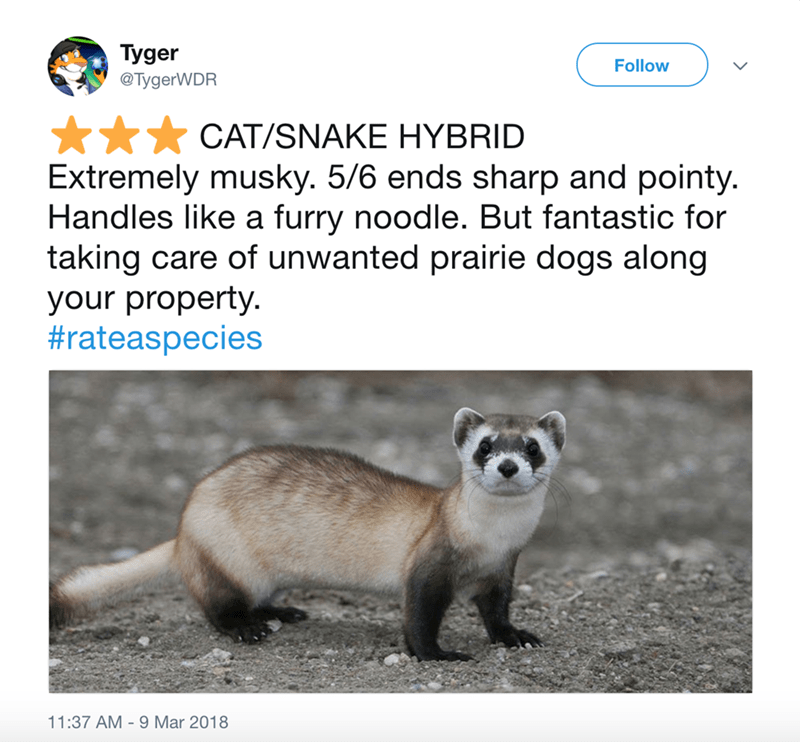 Vertebrate - Tyger Follow @TygerWDR CAT/SNAKE HYBRID Extremely musky. 5/6 ends sharp and pointy. Handles like a furry noodle. But fantastic for taking care of unwanted prairie dogs along your property #rateaspecies 11:37 AM 9 Mar 2018